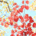 autumn (245)