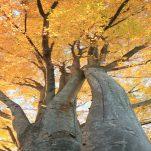 autumn (1337)