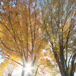 autumn (1369)