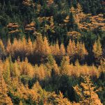 autumn (365)