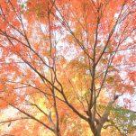 autumn (1694)