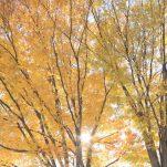 autumn (1395)