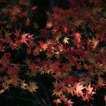 autumn (1820)