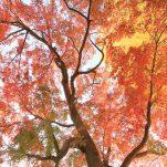 autumn (1699)