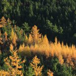 autumn (384)