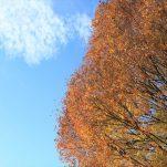autumn (1316)