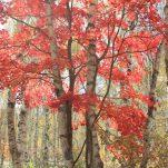 autumn (194)