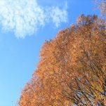 autumn (1318)