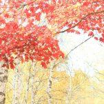 autumn (260)