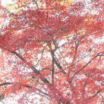 autumn (1685)
