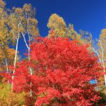 autumn (161)