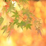 autumn (1709)