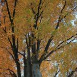 autumn (1353)