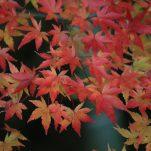 autumn (1789)