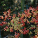 autumn (1808)