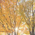 autumn (1391)