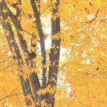 autumn (1413)