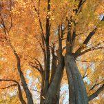 autumn (1338)