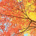 autumn (1703)