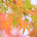 autumn (1728)