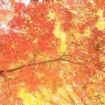 autumn (1700)