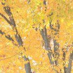 autumn (1430)