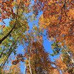 autumn (170)