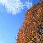 autumn (1317)
