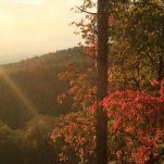 autumn (626)