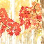 autumn (247)