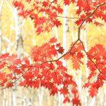 autumn (250)