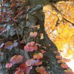 autumn (1543)