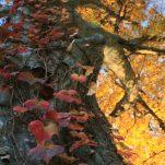 autumn (1535)