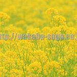flower(10)
