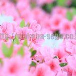flower(13)
